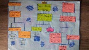 Mapa mental (1) do absolutismo feito por aluno do 7º. ano.
