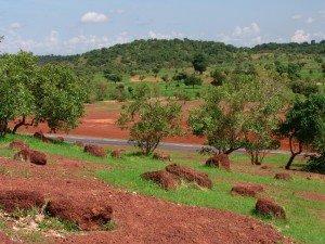 O Sahel após as chuvas