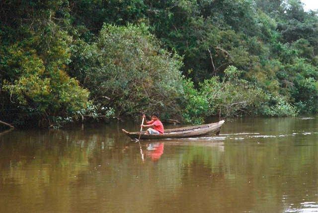 aroto Apiaká, rio dos Peixes, Terra Indígena Apiaká-Kaiabi, Juara, Mato Grosso.