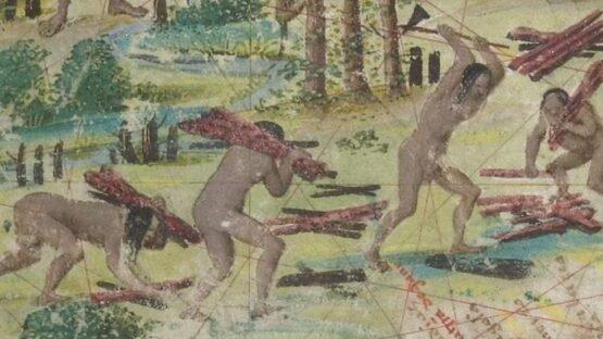 Detalhe do mapa 'Terra Brasilis' (Atlas Miller, 1519), já mostra o corte da madeira pau-brasil. Atualmente na Biblioteca Nacional da França
