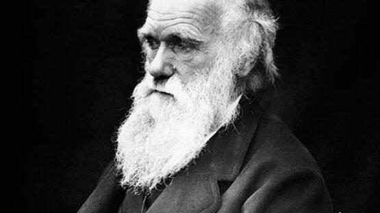 Foto de Charles Darwin (1809-1882) e caricatura Darwin com um corpo de macaco publicada na revista Hornet, 1878.