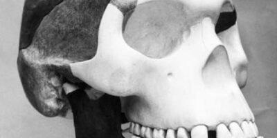 IMAGEM: O Homem de Piltdown, a escura seriam os fragmentos originais e a parte clara é gesso para reconstituir o crânio.